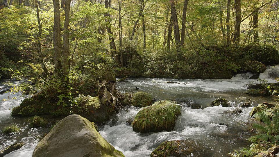 ลำธารโอยราเสะ - Oirase Mountain-stream