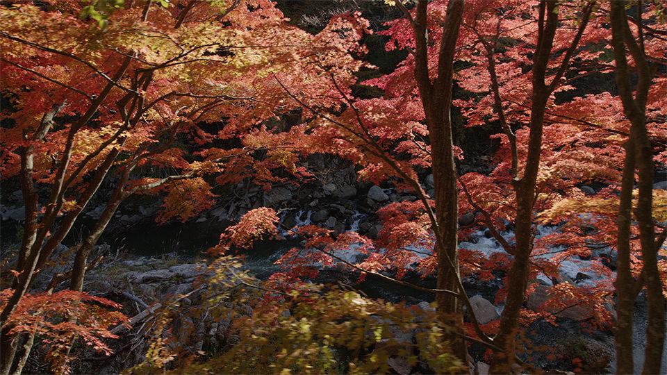 夏井川溪谷 - Natsui River Valley