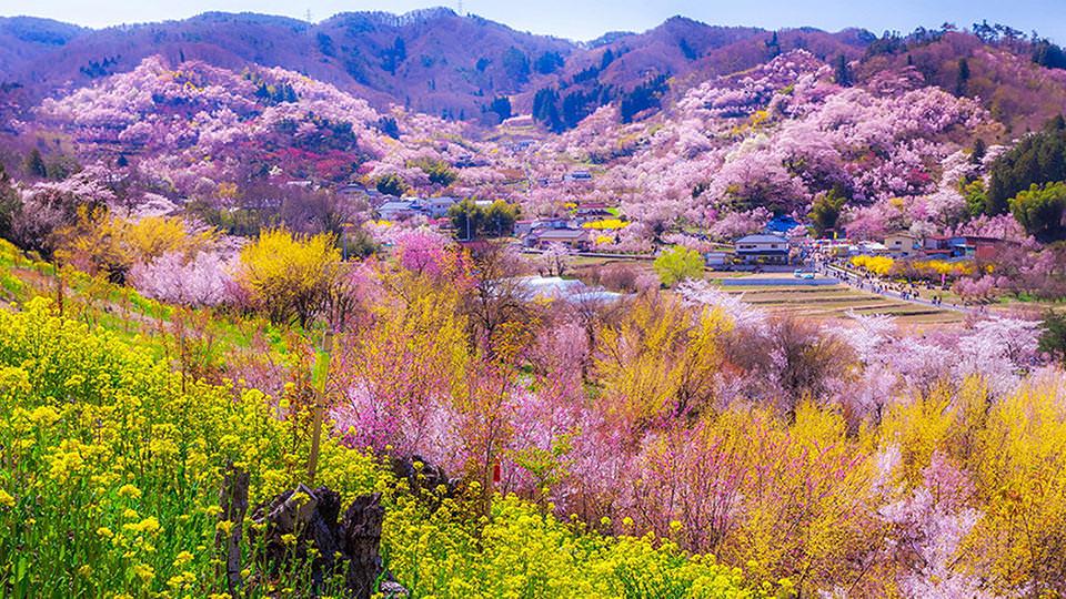 Hanamiyama Park  - 花見山