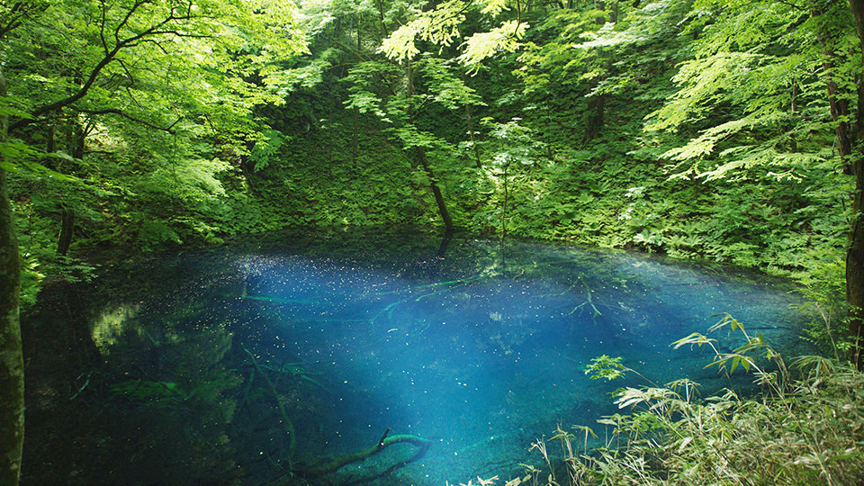 Aoike Pond  - 青池