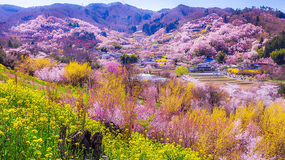 하나미야마 - Hanamiyama Park