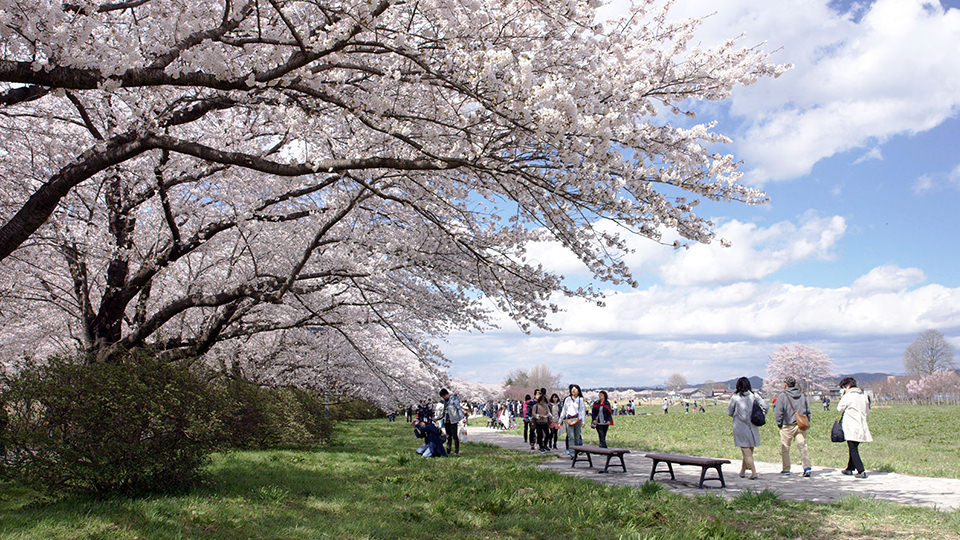 北上展胜地 - Kitakami Tenshochi Park