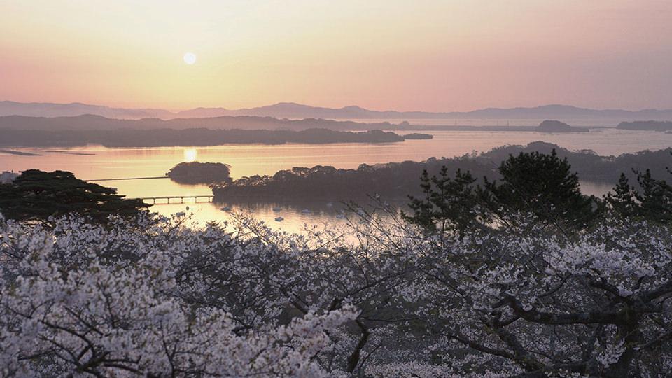 西行(1100年代的武士·歌人)驻足不前的松树公园 - Saigyo Modoshi no Matsu Park