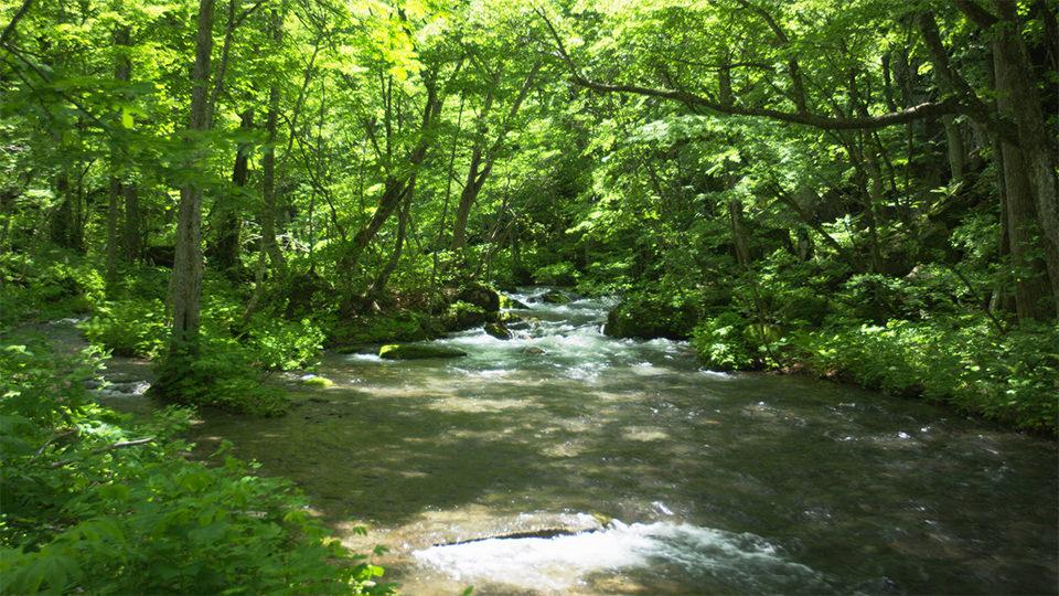 Oirase Stream - 奥入瀬渓流