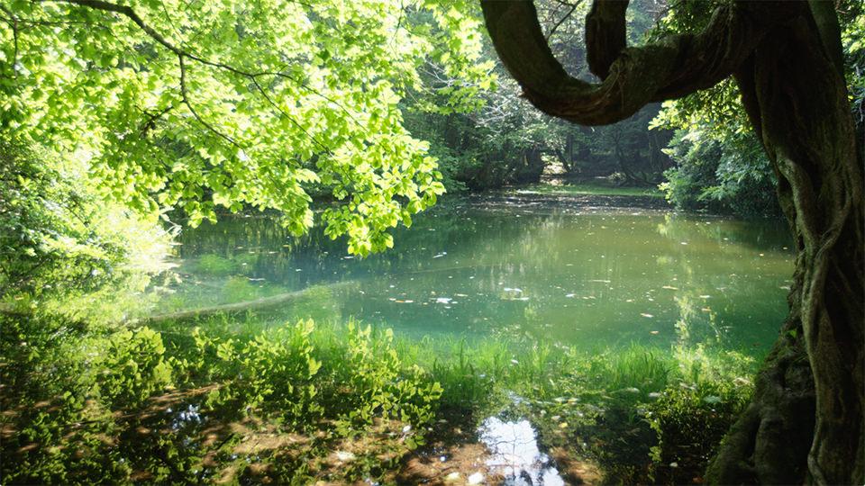 Maruike-sama Pond - 丸池様